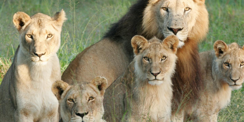Zuid-Afrika gezinsvakantie | rondreis met kinderen vanuit hotels en lodges | SNP Natuurreizen