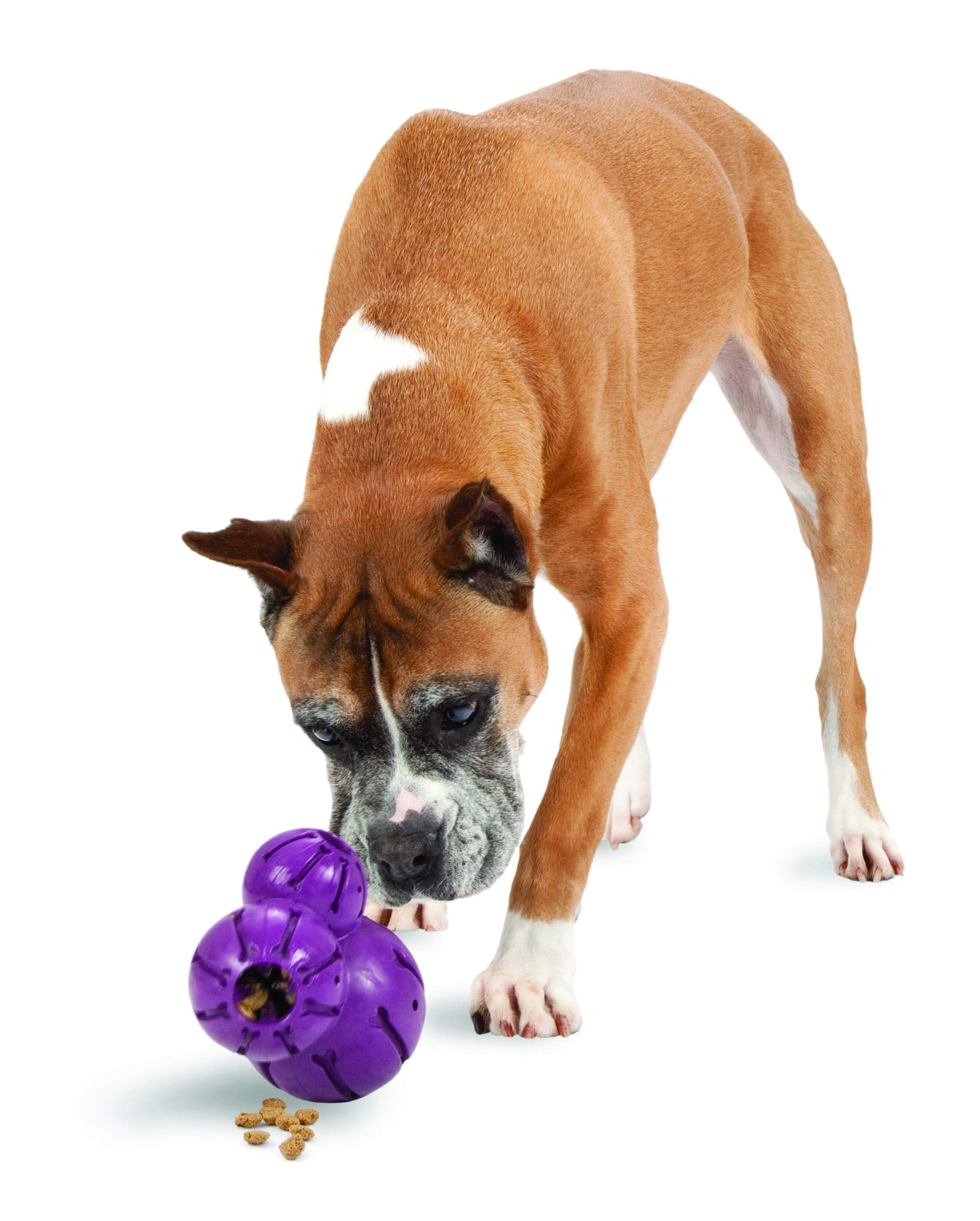 Busy Buddy Barnacle Treat Dispensing Dog Toy Ad Barnacle