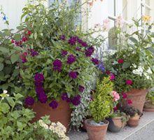Kesäkuun puutarhatyöt