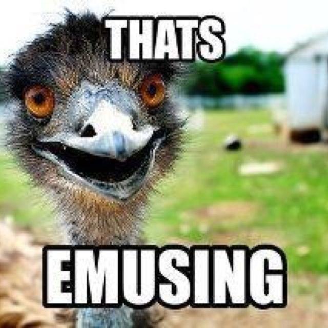 Oh emu... | zoo puns | Pinterest | Emu, Funny stuff and ...