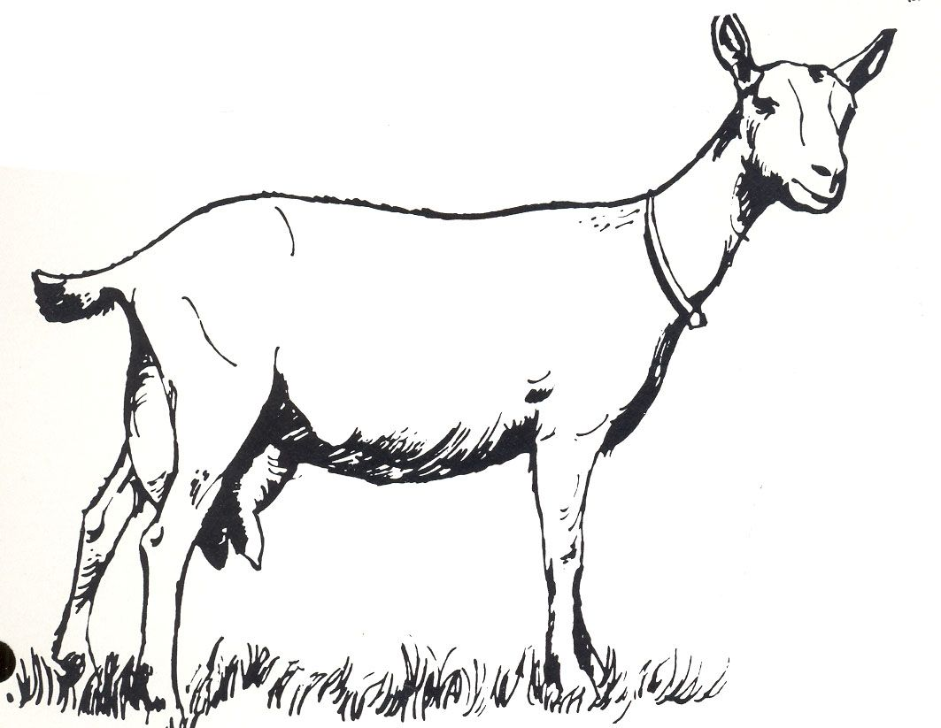 Line Drawings Of Baby Animals : Goat clip art soap pinterest goats