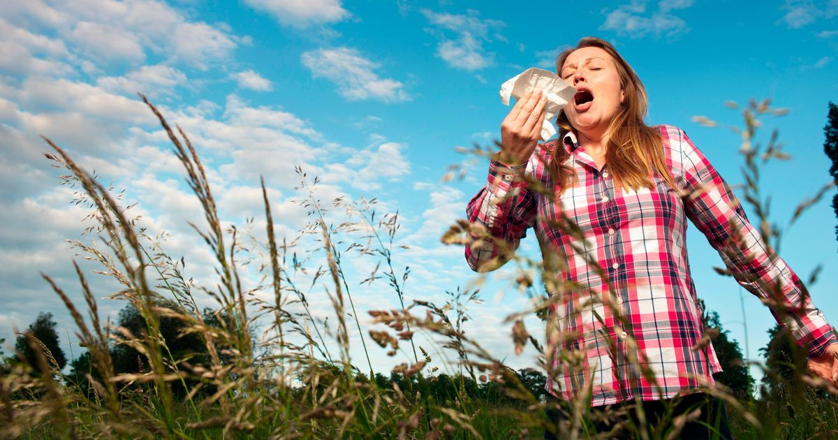 Grass Pollen Can Help Predict Asthma Hay Fever Allergies Traditional Chinese Medicine Allergy Remedies