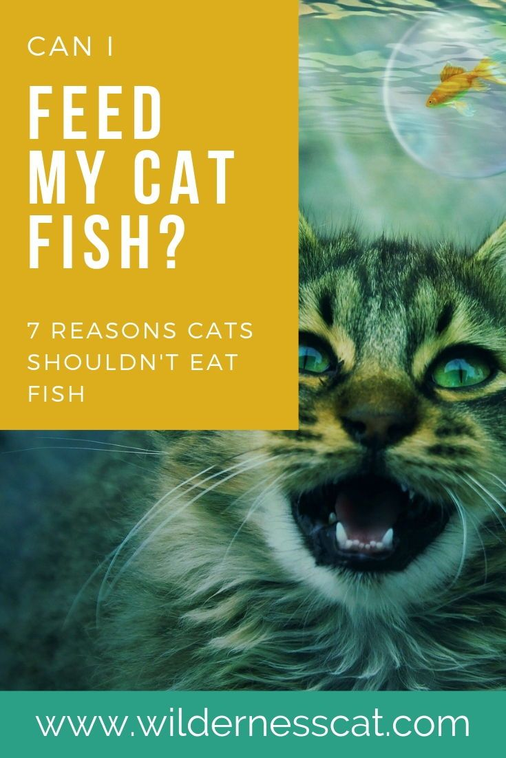 Can Cats Eat Fish? Reasons Why Cats Shouldn't Eat Fish