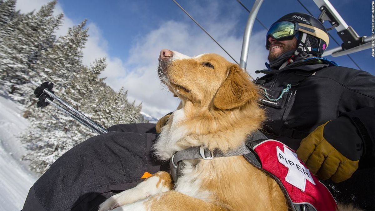 Colorado S Ski Rescue Dogs Are The Real Life Paw Patrol Dogs