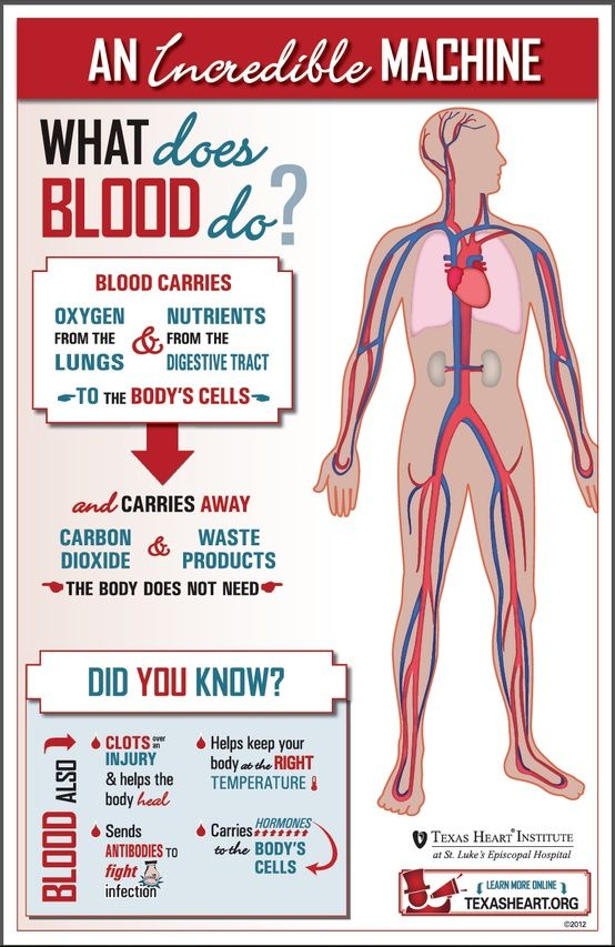 What does #blood do? Educate yourself.   BODY Works ~ Anatomy ...