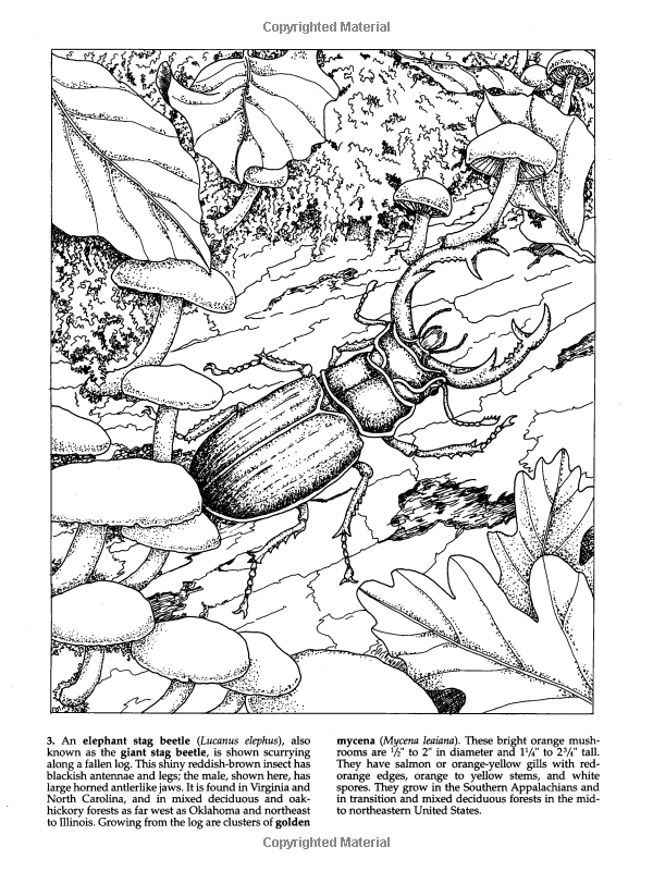 Forest Animals Coloring Book Dover Nature Dianne Gaspas