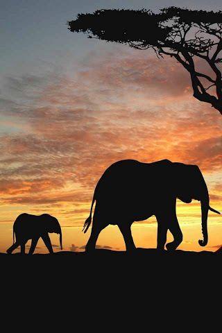 Madre E Hijo Pintura De Elefante Paisajes Con Animales Arte De áfrica