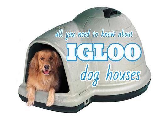 Igloo Dog Houses Why Dogs Love Them Our Top Picks Dog Igloo