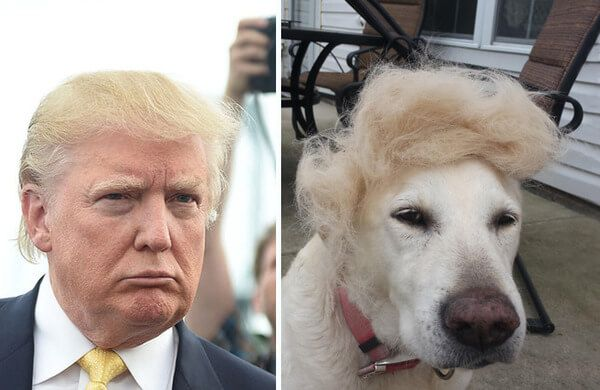 Image result for trump funny dog