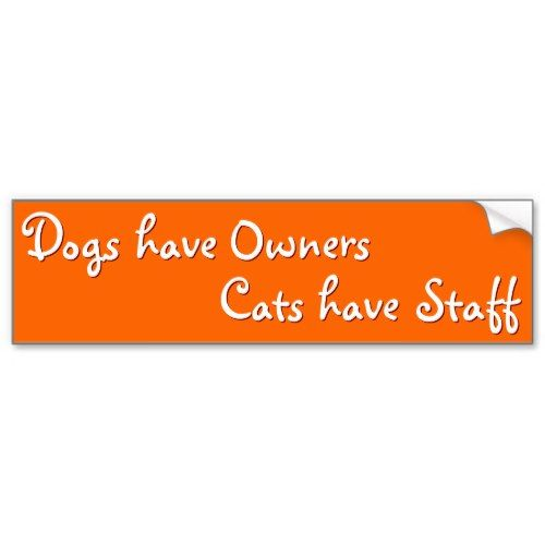 Dogs ve owners cats ve staff funny bumper sticker