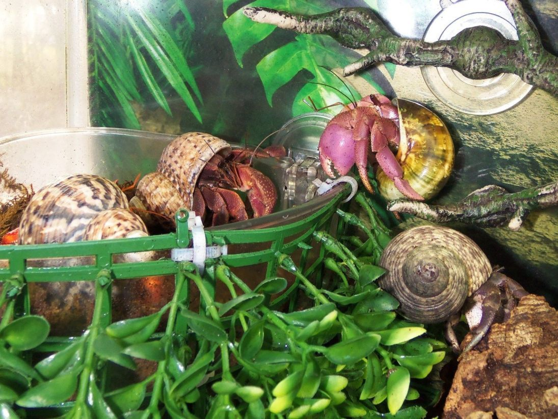 33 Hermit Crab Tank That S Easy To Create With Images