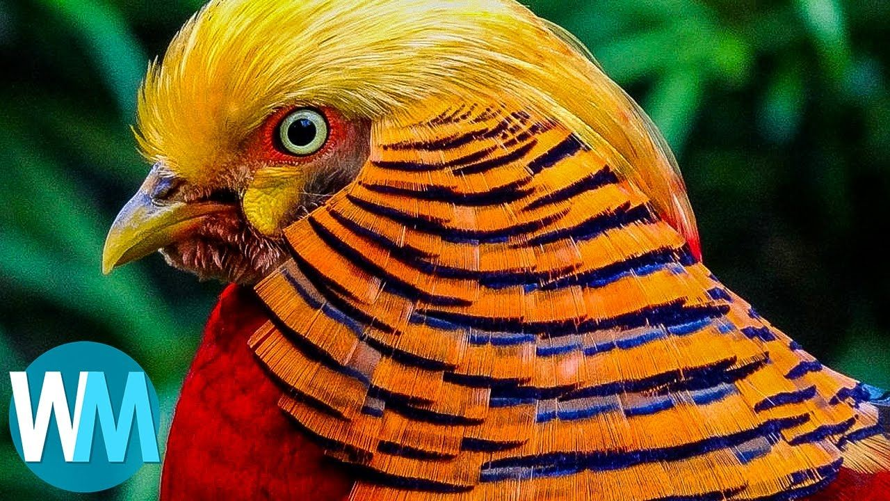 Top 10 Most Stunningly Beautiful Birds in the World