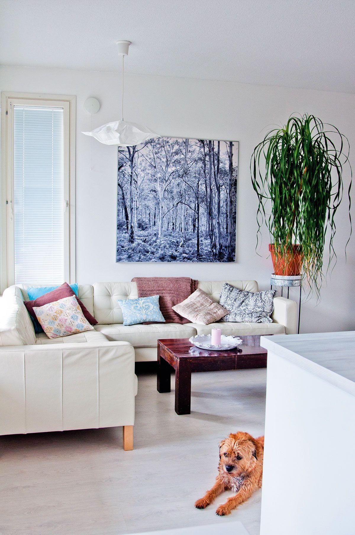 Olohuoneen valkoinen nahkasohva on Ikeasta. Riitta Souranderin valokuvateos seinällä on kuin toinen ikkuna.