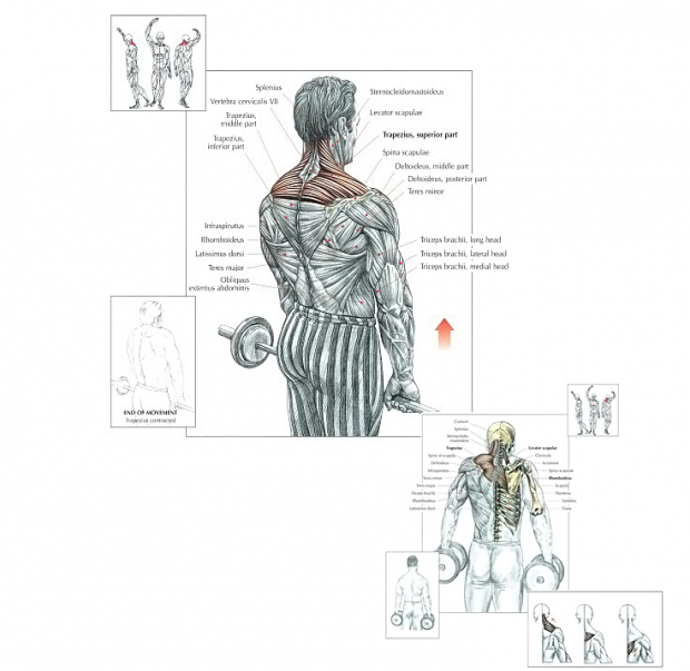 exercise for trapezius muscle