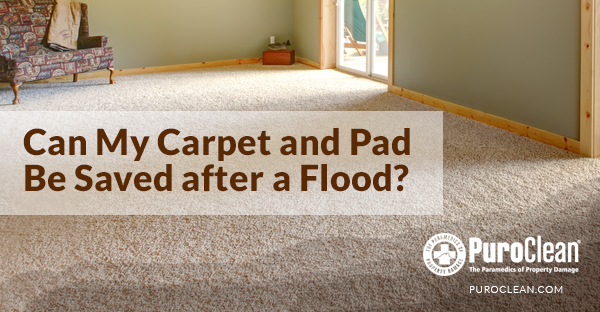 Flooded Carpet Cleaning Can You Save the Carpet after a