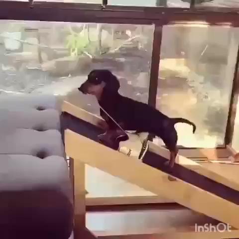 Dachshund Ramp Dach Ramp Dachramp Dog Ramp Dachshund Bad Ramp