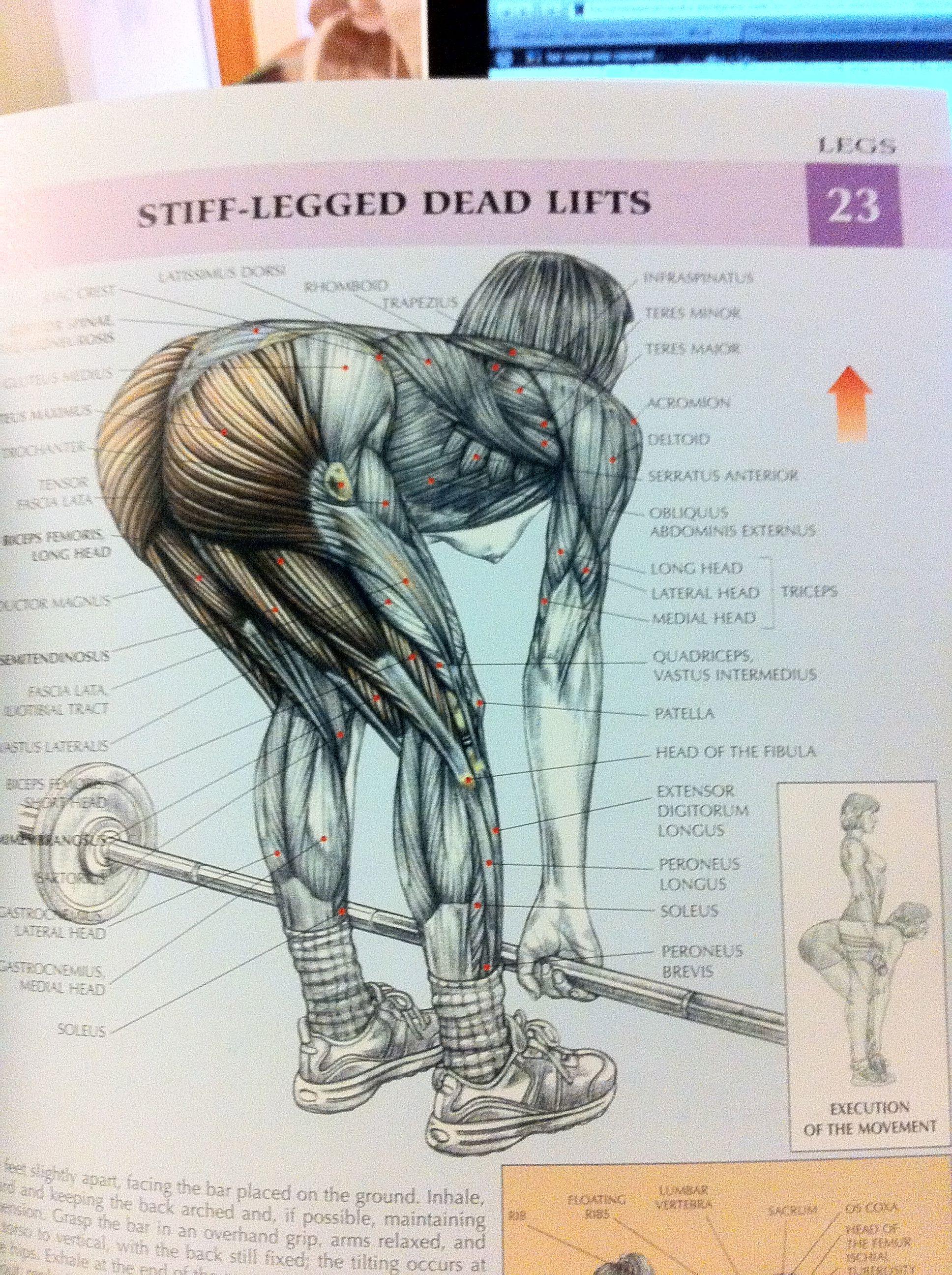 Female Strength | Women\'s Strength Training Anatomy – a … | Get that ...