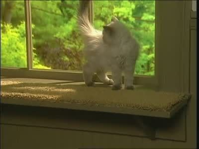 How To Cat Windowsill Shelf Extension Window Sill Cat Hammock Diy Window