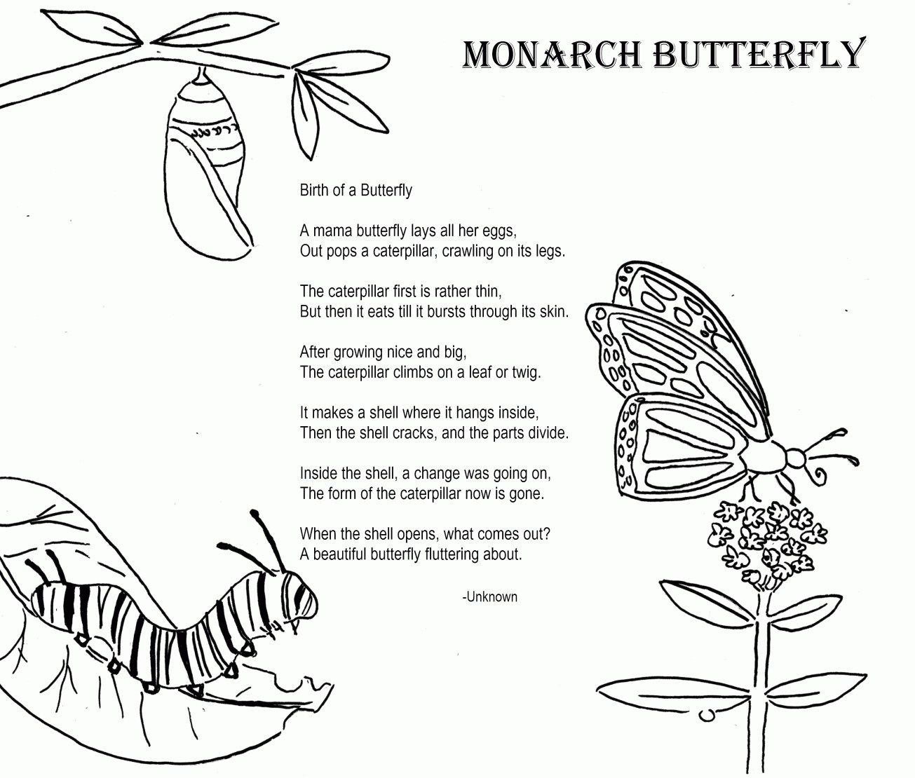Brilliant Image Of Monarch Butterfly Coloring Page Davemelillo Com Butterfly Life Cycle Butterfly Coloring Page Monarch Butterfly