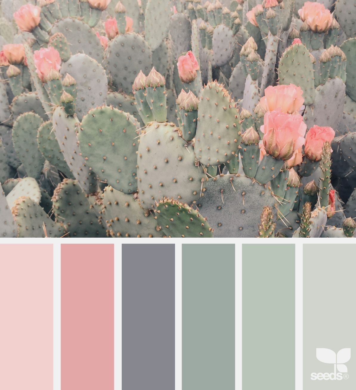 Design Seeds – Find Your Favourite Colour Combination