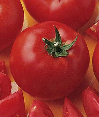 Tomato Bush Early Girl Hybrid Growing Tomatoes From 400 x 300