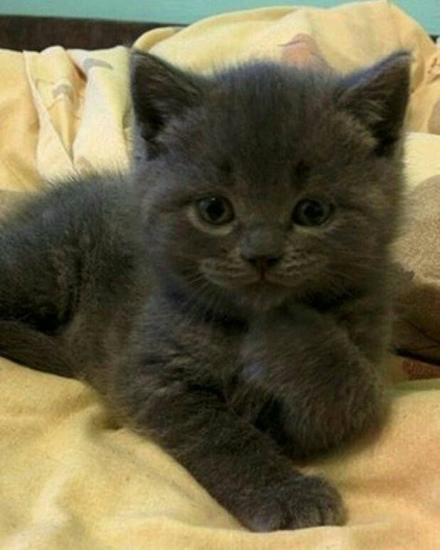 Najlepšie mačička čierna