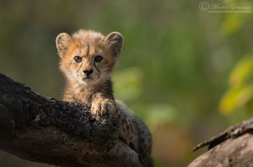 Hello There! by Morkel Erasmus