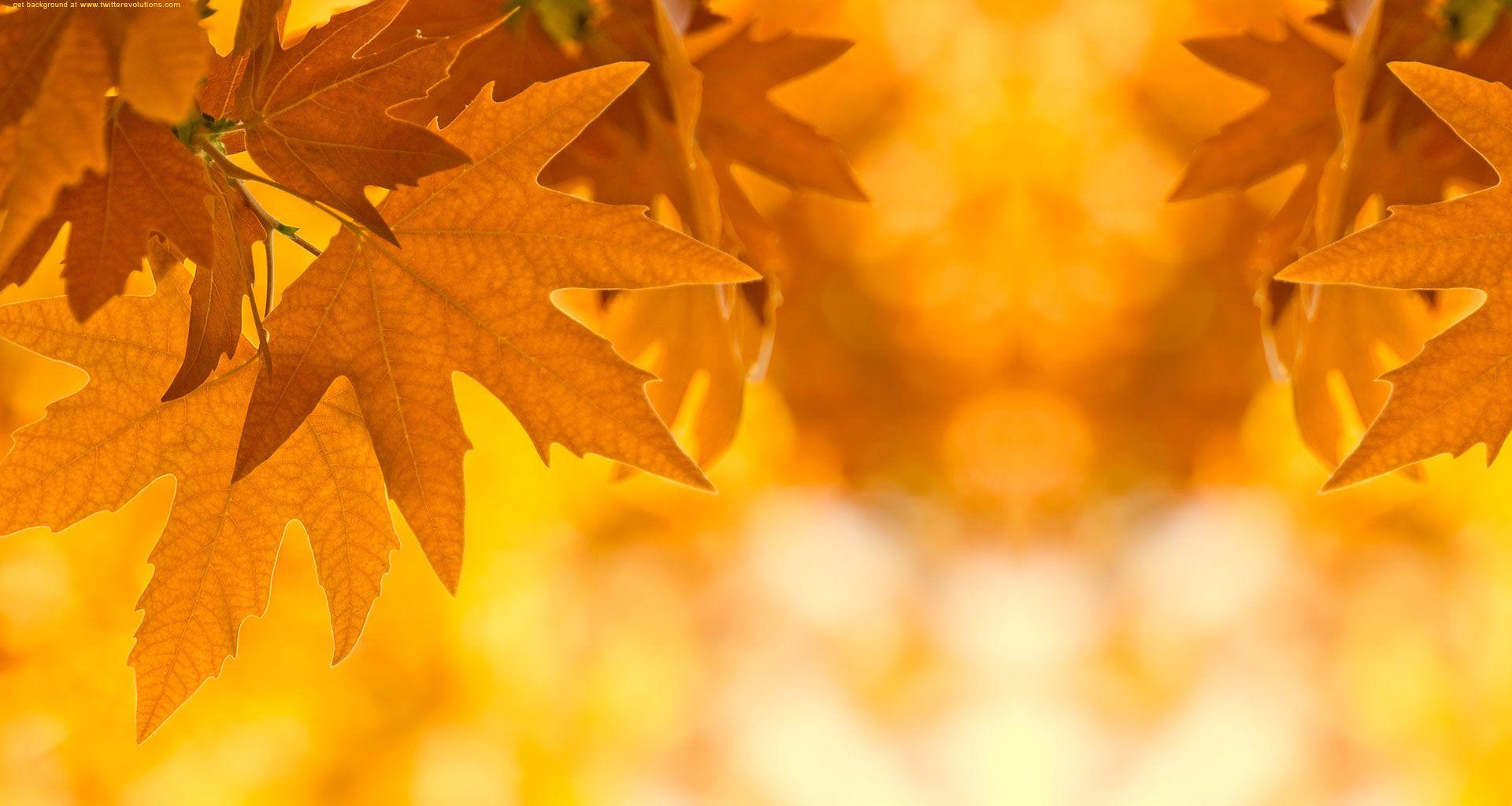 Beautiful Wallpaper Minecraft Autumn - 45f40cf471233b896ca286b6a7c3a264  Image_97214.jpg
