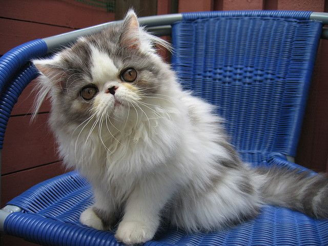 Cassiopeja Kittens Cutest Beautiful Cats I Love Cats