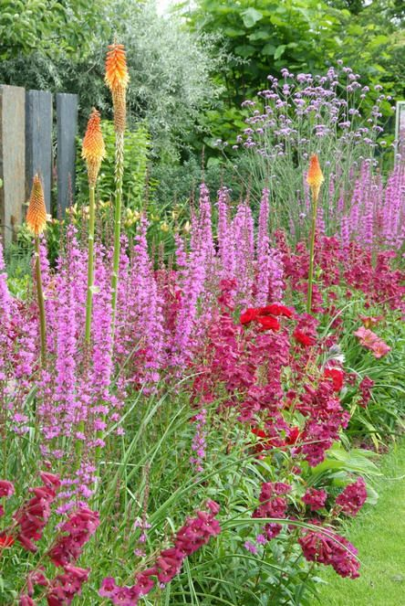 Vaste planten tuin met vaste planten voor een for Mooie voortuinen foto s