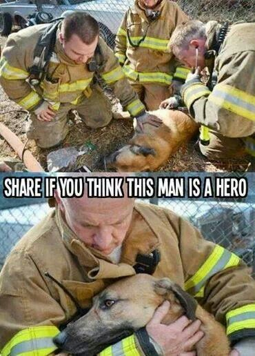 Hero S Are Those Who Give The Voice To Those That Have None Dogs Firefighter Animal Stories