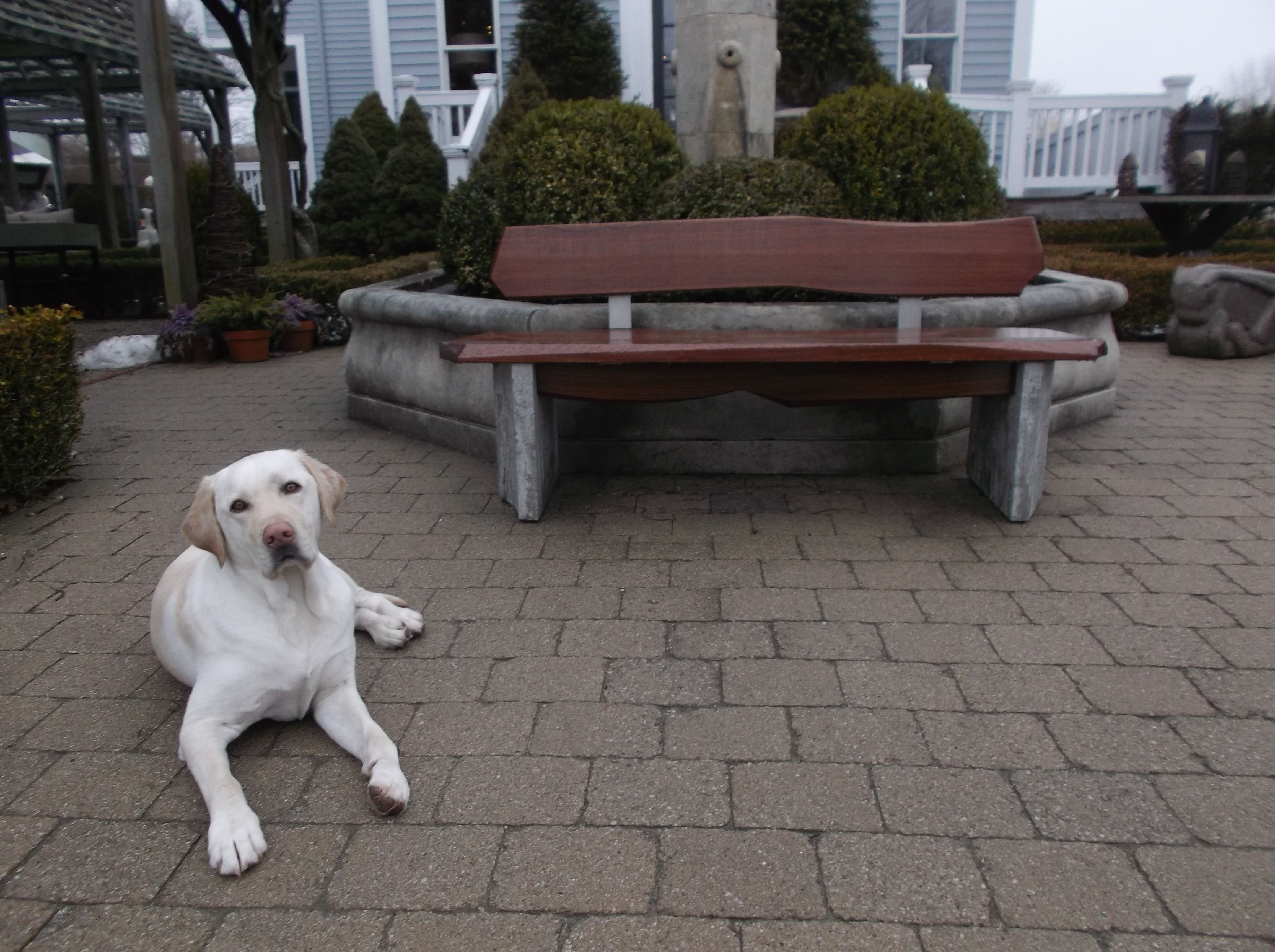 Astounding Adorable Ike Enhances This Southampton Garden Bench Evergreenethics Interior Chair Design Evergreenethicsorg
