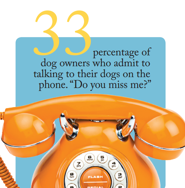 33 of dog owners talk to their best friends on the phone