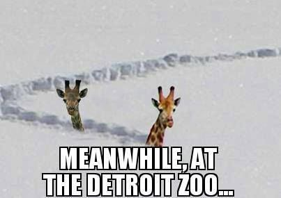 meanwhile at the Detroit zoo
