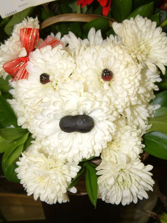 A puppy made entirely out of flowers! My husband gave it to me, compliments of my sister-in-law who is a florist. So creative!