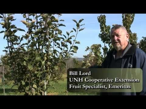 Complete Guide to Starting a Home Orchard: Apples, Pears, Cherries, Plums and Peaches