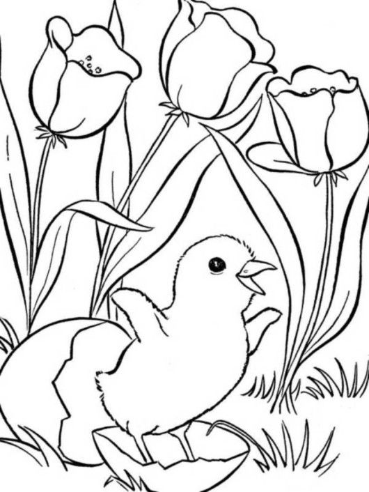 Cute Little Chick And Flower Spring