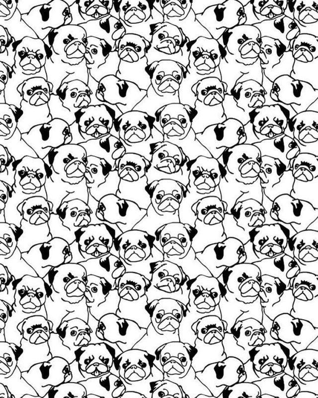 Oh pugs
