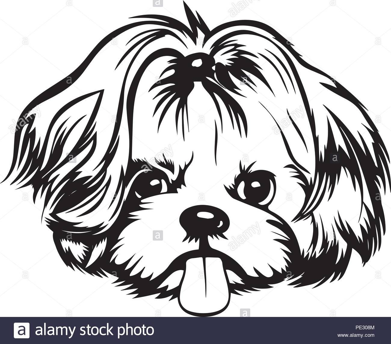 Download This Stock Vector Shih Tzu Dog Breed Pet Puppy Isolated