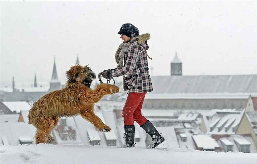 Dog Days of Winter ~ Sabine Conrad plays with her French sheepdog El Lobo in front of the snow-covered rooftops of Erfurt, central Germany, on Jan. 17, 2013.