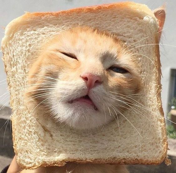 Can Cats Eat Bread? Is Bread Safe For Cats? - CatTime