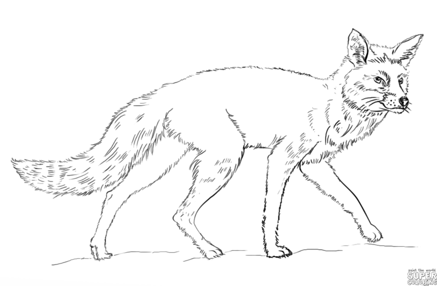 How To Draw A Red Fox Step By Step Drawing Tutorials Fox Coloring Page Coloring Pages Lion Coloring Pages