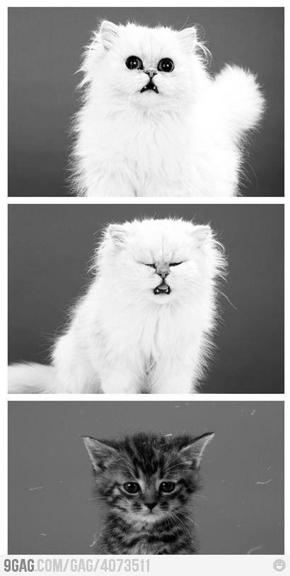 Cutest sneeze Animals beautiful, Cute animals, Crazy cats