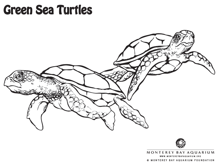 Green Sea Turtle Coloring Page Coloring Pages From The Monterey