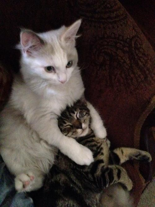Phototoartguy Kittens Who Love Each Other Reddit Kittens