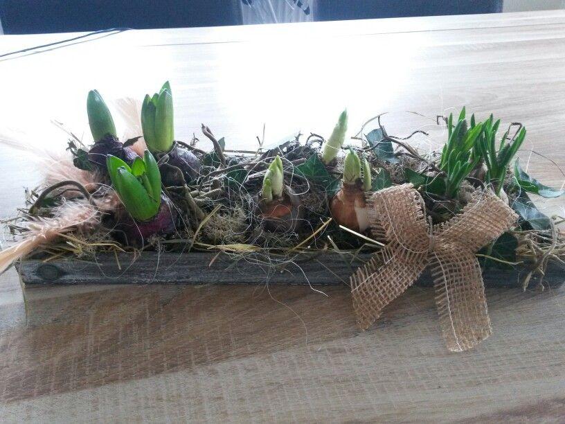 Voorjaarsbakje met bloembollen