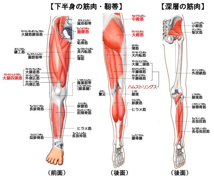 人体の下肢です