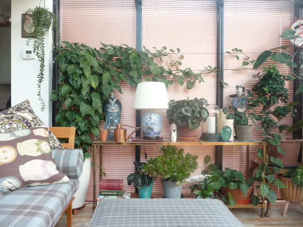 8 house plants that are easy to keep alive haven 4 home for Easy gardens to maintain