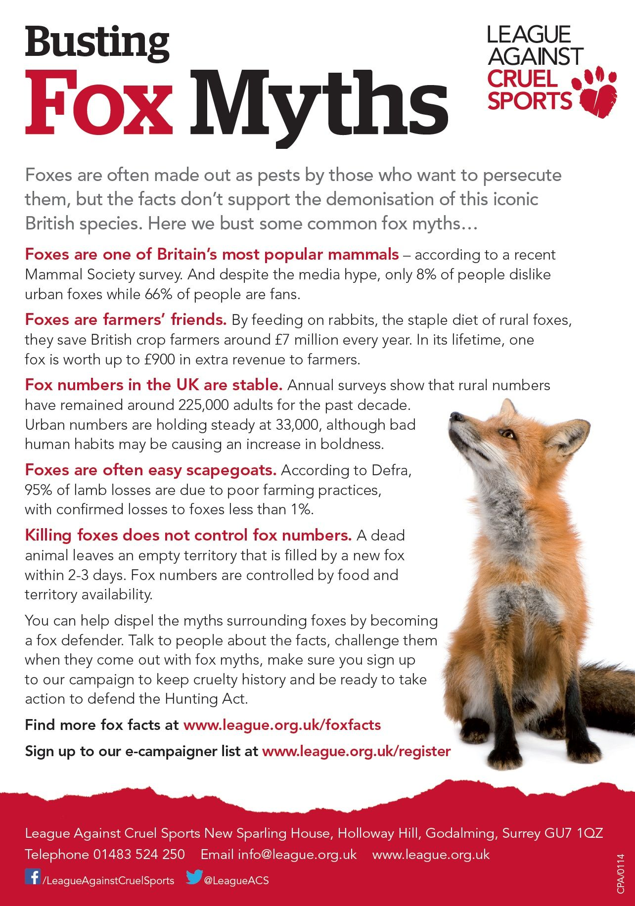 Support us in busting fox myths for #FoxyFeb! www.league.org.uk/foxyfeb