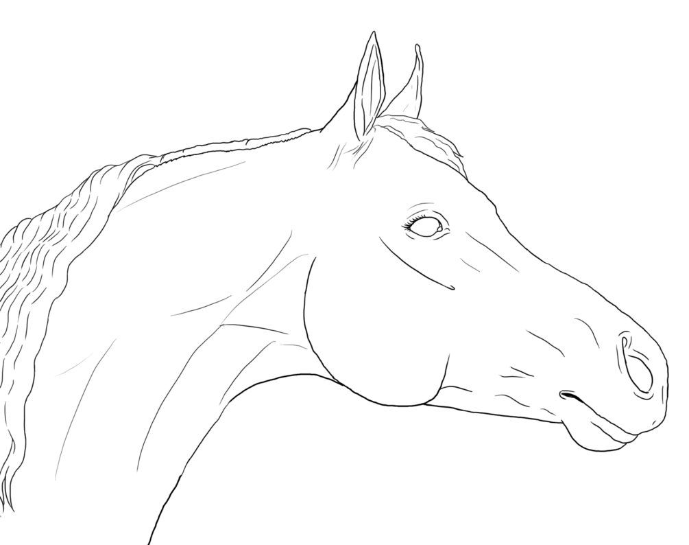 Horse Drawings Equine Artwork Horse Face Drawing